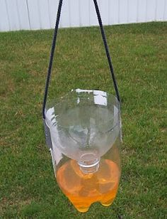 PET palackos darázscsapda